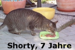 shorty_7_jahre