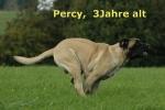 percy3jahre