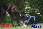 maxi-minniefr.mosbrucker