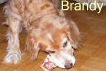 brandybarf1
