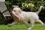 clyffe