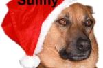 sunny__trauscheid-welter