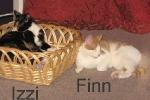 izzi_und_finnfr.stiller