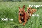 xelina_luna_pepperfr.brandt_kopie