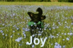 joy_fr.metzger1