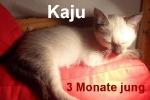 kaju_3_monate_fr.mueller