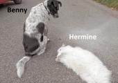 benny-und-hermine-hr-doehm_