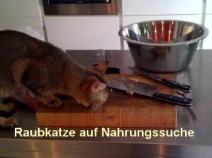 tiger_auf_nahrungssuche