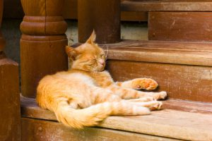 rustic red cat sleeps on a brown wooden steps