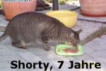 shorty_7_jahre