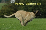 percy3jahre