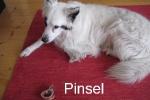 pinselfr.schielke