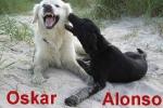 oskar_alonsofr.schweitzer