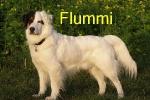 flummi_fr.freckmann