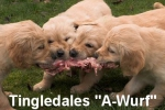 tingledales_a-wurf