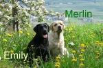 emily_und_merlin_frau_opitz