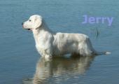jerry-frau-rosenik