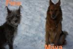 maya_und_fino_frau_scholz