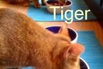 tiger_und_floh_fr.wilske